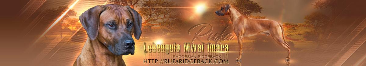 RUFA | Lobengula Mwai Imara